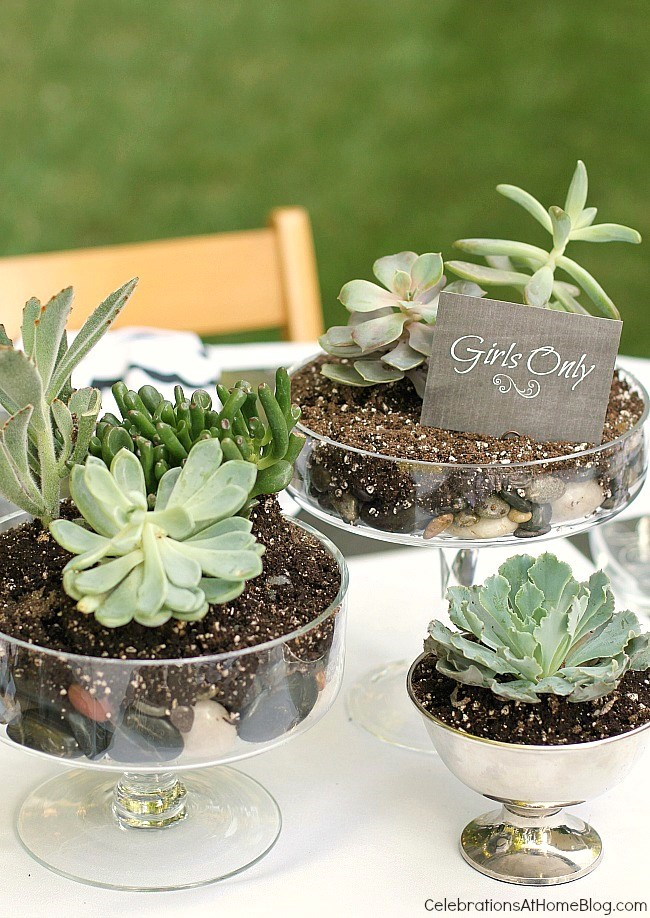 Create a unique centerpiece of succulents for a casual dinner party.