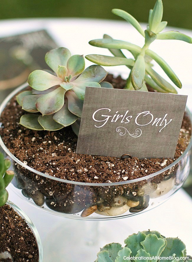 Create a centerpiece with cactus and small sign.