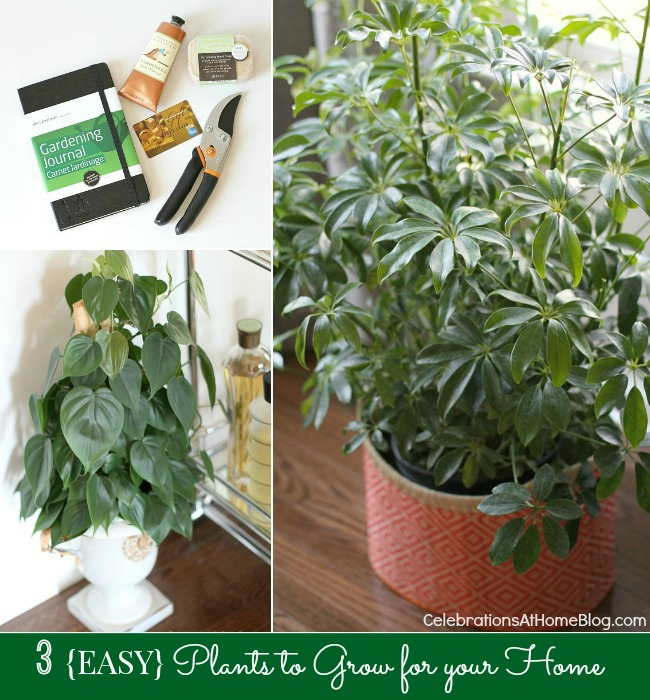 my 3 favorite easy plants to grow celebrations at home