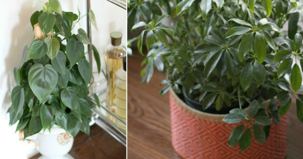 My 3 Favorite {Easy} Plants to Grow