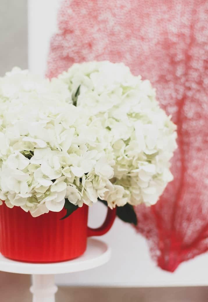 white hydrangeas in red vase