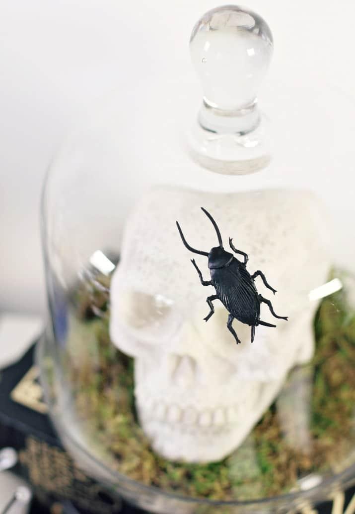 Halloween bar decor, skull under glass cloche