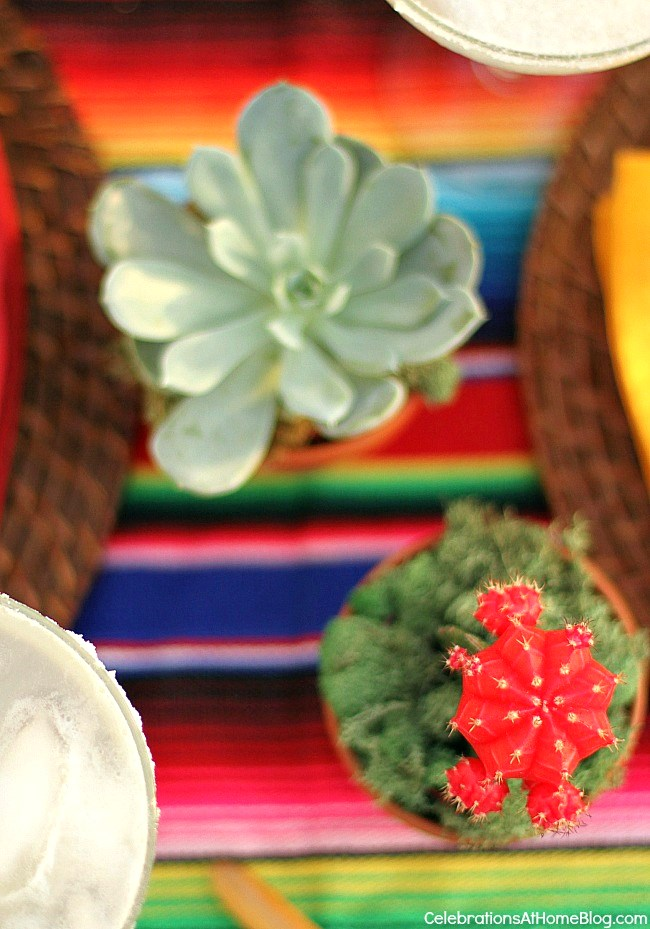 You'll love these tabletop and entertaining ideas for Cinco de Mayo - cactus as part of the centerpiece