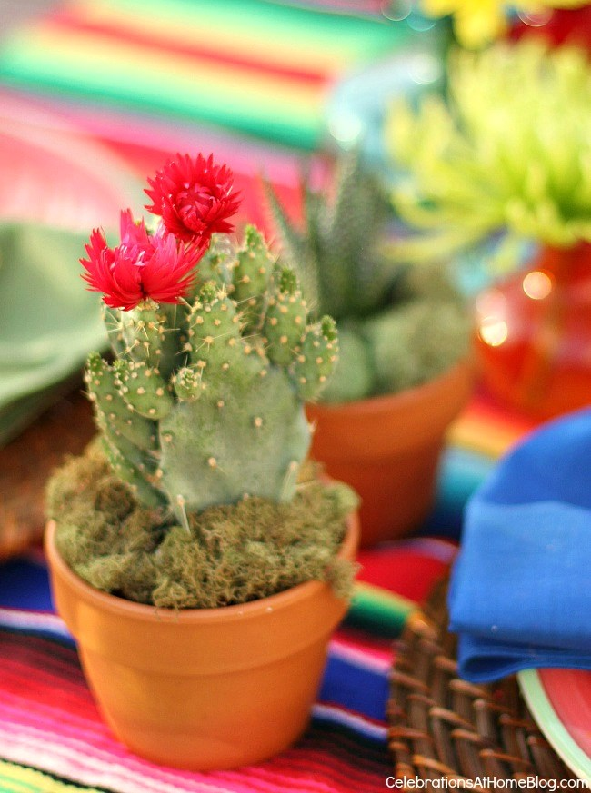 potted cactus on table setting