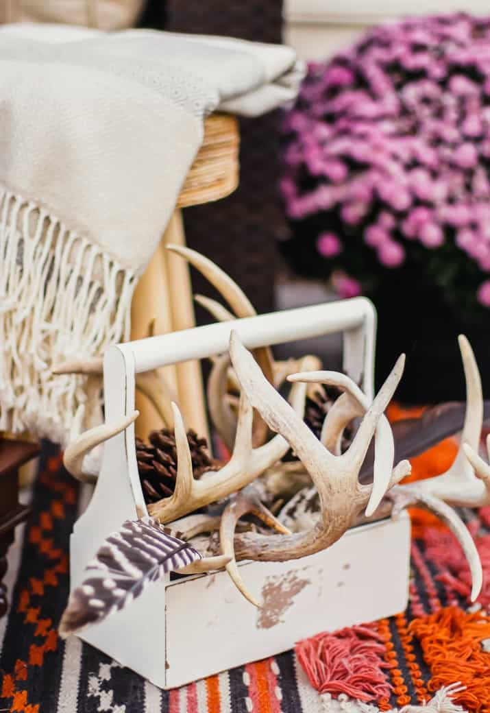 foraged antlers in caddy