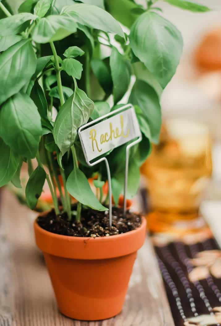potter herb party favors and place card