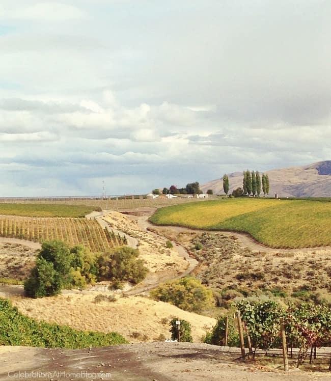Washington State wine country; Precept wine vineyards