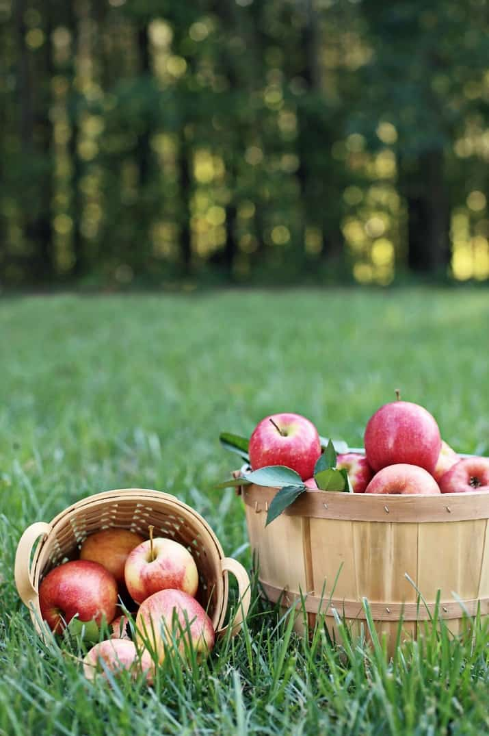apple picking, baskets of apples in grass